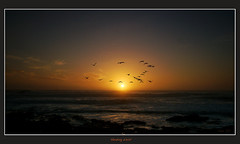 Heading West (david.gill12) Tags: sunset southafrica noordhoek gannets