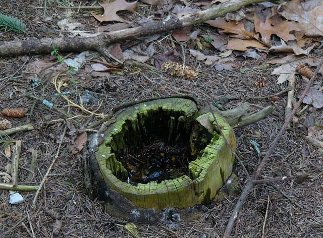 070429_stump