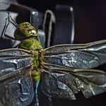 #194   DragonFly thumbnail