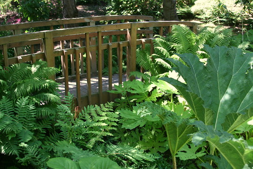 bridge over gunnera
