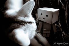 Tundukkan Pandangan (Al-Insyirah Lensa) Tags: cat kucing danbo danboard danboardroveltech