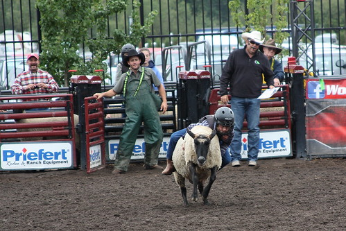 Mutton busting by The Bacher Family
