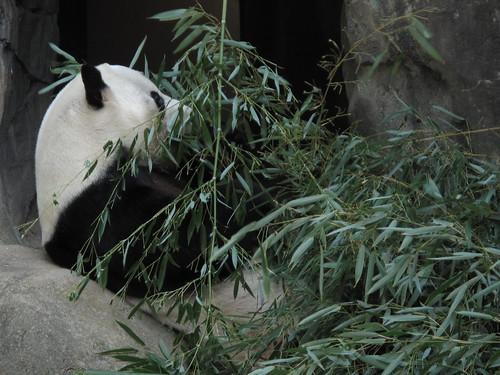 Zoo 0061
