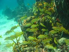 Snorkeling nas Islas del Rosario