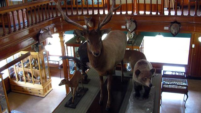 Banff Park Museum.