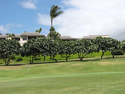 Maui Chiaki 925