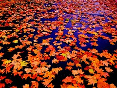 Autumn (Keith211) Tags: digital leaf digitalphoto naturephotography d300 landscapephotography beautifulpicture digitalphotographer colorfullandscape leefilter outdoorphotographer digitallandscape prettylandscape colorfulpicture