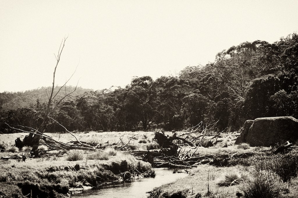 Australian bush near Naas Road, ACT, Australia.