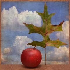 Unique View (njk1951) Tags: sky apple leaf view pointofview squareformat oakleaf cloudysky redapple uniqueview beunique texturedsky magicunicornverybest —obramaestra— blinkagain
