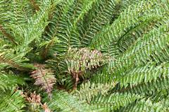 L1007744 (Maharepa) Tags: leica newzealand plants fern green nature natur pflanzen grn aotearoa farn neuseeland m9