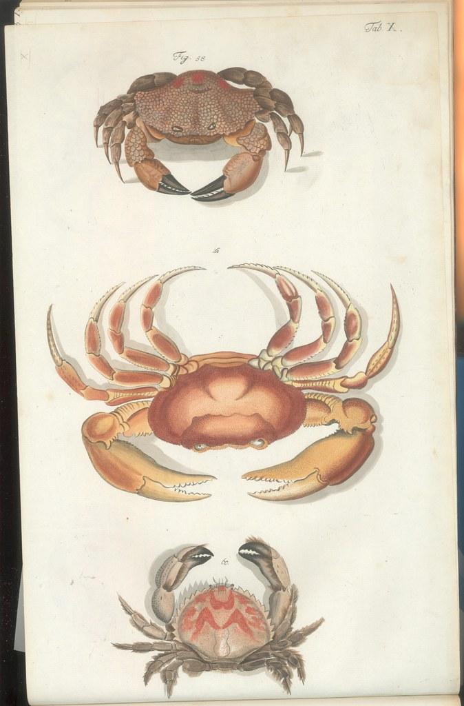 Versuch einer Naturgeschichte der Krabben und Krebse a