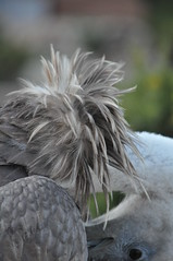 Vulture Club :-) (Hayley Wincott) Tags: spain head wildlife andalucia vulture birdsofprey costadelsolfeathersbird