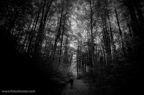the gloomy wood by fotoshoota.com