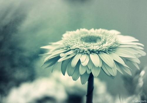 Aching silence magnifies my sadness