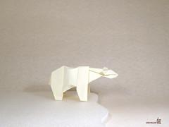 Polar bear_Juston Hairgrove_001 (Osvaldo Diaz F) Tags: bear polar
