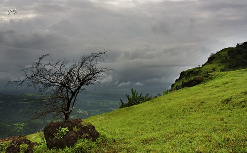 Leafless in peak monsoon by Yogendra174
