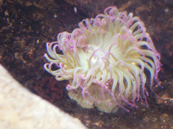 invertebrado-rosa