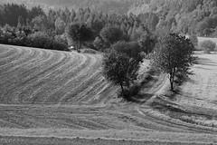 Landschaftslinien SW (Bluespete) Tags: germany landscape deutschland blackwhite nikon sw psi schwarzweiss landschaft taunus d90 taunusstein seitzenhahn petersieling 6322425 32143153 bluespete