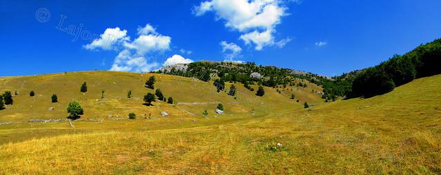 Pasture (Legelő)