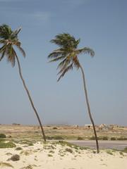 CAP VERT 09.2011 676 (MUMU.09) Tags: verde island cabo vert insel cap isla caboverde isola boavista le capvert leducapvert