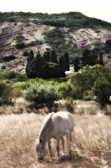 Horse (Focusje (tammostrijker.photodeck.com)) Tags: horse white france grass vertical french landscape glow south romantic