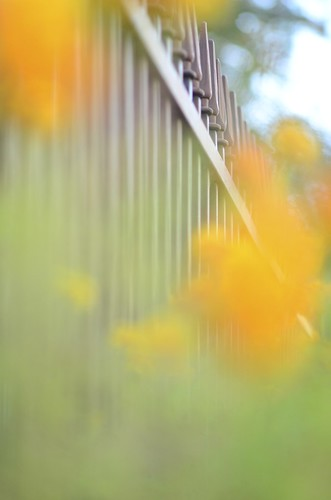 Yellow, green and a fence by Kalexanderson
