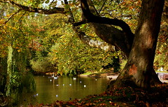 Lake (* RICHARD M (Over 5.5 million views)) Tags: autumn trees lake nature water birds shadows parks september southport scapes botanicgardens lightshade sefton churchtown publicparks