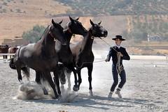 Caballos [Explore 2-10-11] (E.M.Lpez) Tags: horse animal caballo caballos otoo concurso animales jaen jinete yegua equitacin equino 2011 purarazaespaola alcallareal concursomorfolgico