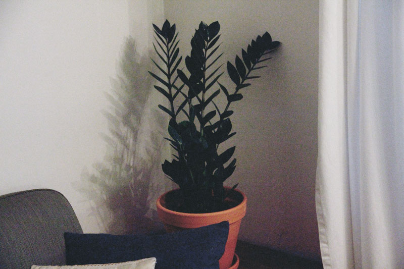 planter_3
