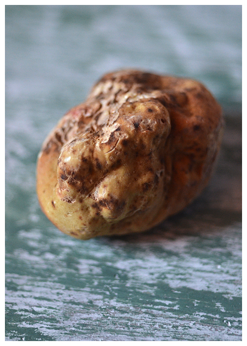 Alba White Truffle© by Haalo