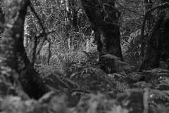 under the trees (devonteg) Tags: nikon september grasses bracken birch ferns exmoor 70300 2011 d80 dickyspath