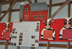 Berlin CT Fair (caboose_rodeo) Tags: 961 dairycattle herdsrus4hclub