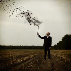 242 of 365 (Morphicx) Tags: birds cornfield smoke canon5d 365 crows deventer canon50mmf14 bobvandenberg 365shotsin365days youaregonnamakeit fearsoutthedoorplease