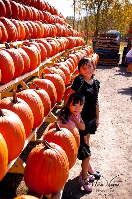 Pumpkins 146