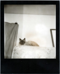 Queen of the Mattresses (This Is A Wake Up Call) Tags: bw cat polaroid mattress impossible molko blackframe slr680se tumblr px600