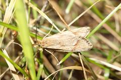 Motte (brownandi) Tags: life light nature beautiful forest canon landscape eos licht outdoor country natur moth environment kontrast leben schmetterling microcosm schn motte 600d