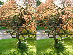 3D Bath botanical gardens (3D shoot) Tags: stereoscopic stereophoto stereophotography 3d bath somerset stereo parallel bathspa stereoscope parallelview 3dshoot
