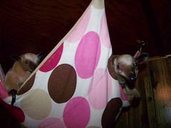 Pua and Ori in the hammock