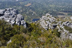 Looking down towards Kirstenbosch Photo