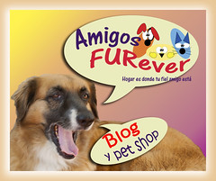 Portada Blog y pet shop