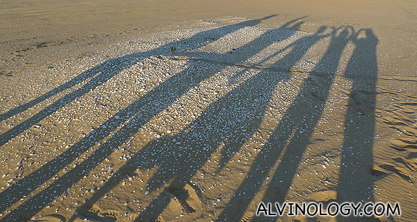 Our long shadows cast on the midden