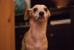 defcon FREAK OUT (petit hiboux) Tags: dog nano takenbyluke