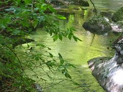 Restare un p al verde... (ANNA ALESI) Tags: italy fiume valle abruzzo maiella riservanaturale caramanico orfento