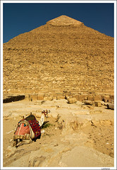 Egitto _0143 (Lanfranco_B) Tags: old ancient pyramid egypt camel egitto piramide piramidi cammello