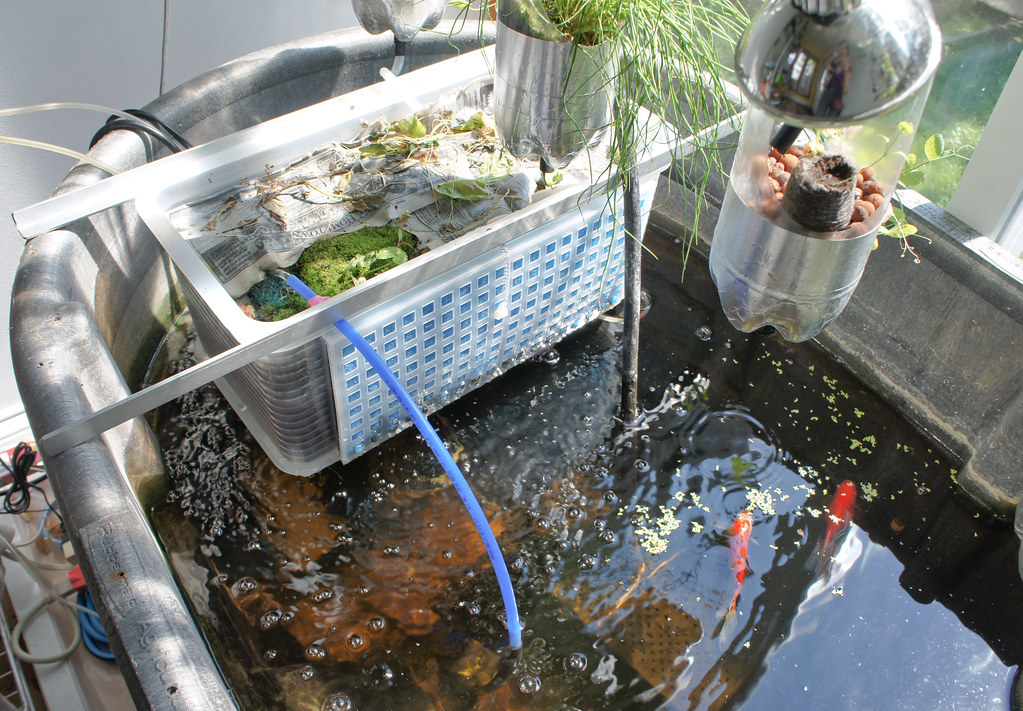 Worm basket in aquaponic system - added on Sept 9, 2011