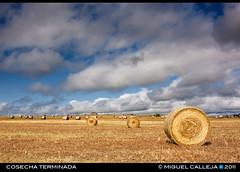 COSECHA TERMINADA (Miguel Calleja) Tags: landscape harvest paisaje cosecha castillayleón