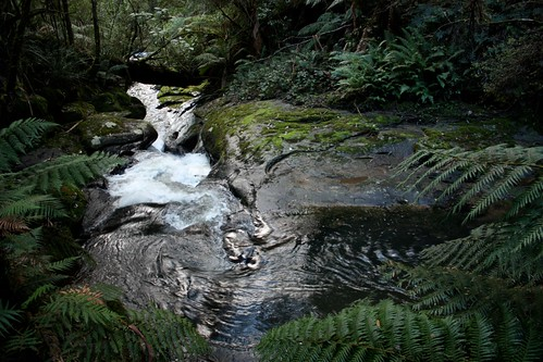 Beech Forest, Victoria (Australia)