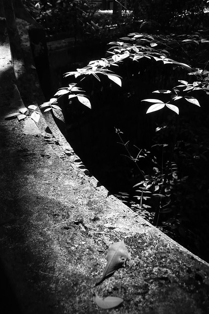 20110917 林家花園