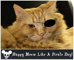 Jasper Meow Like A Pirate