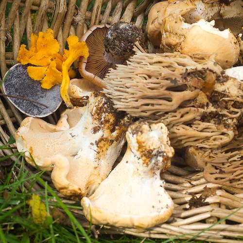 Basket O' Mushrooms.